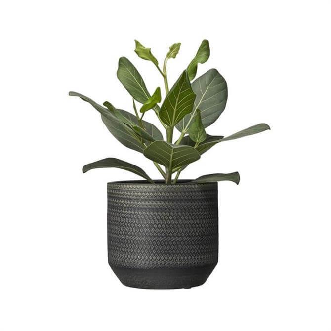Giovana Plant Pot