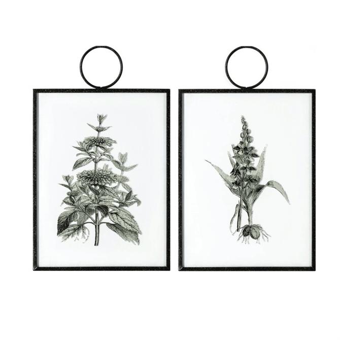 The Botanist Study II Hanging Art Set of 2