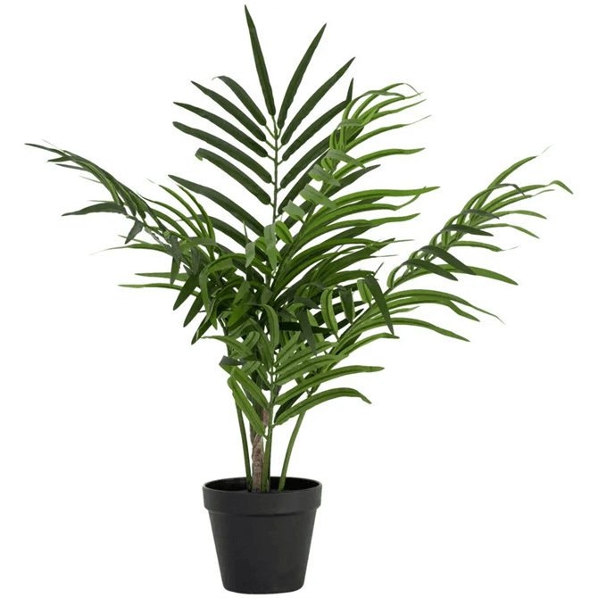 Grand Illusions Butterfly Palm in Pot
