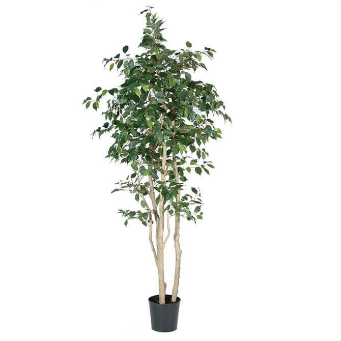 Green Multi Stem Artificial Ficus Tree
