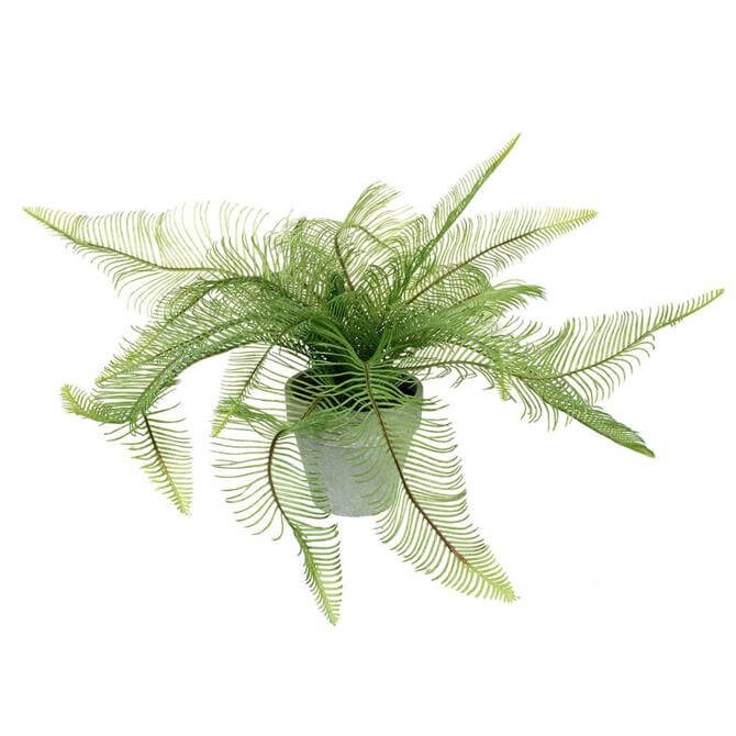 Parlane Feathered Fern Potted