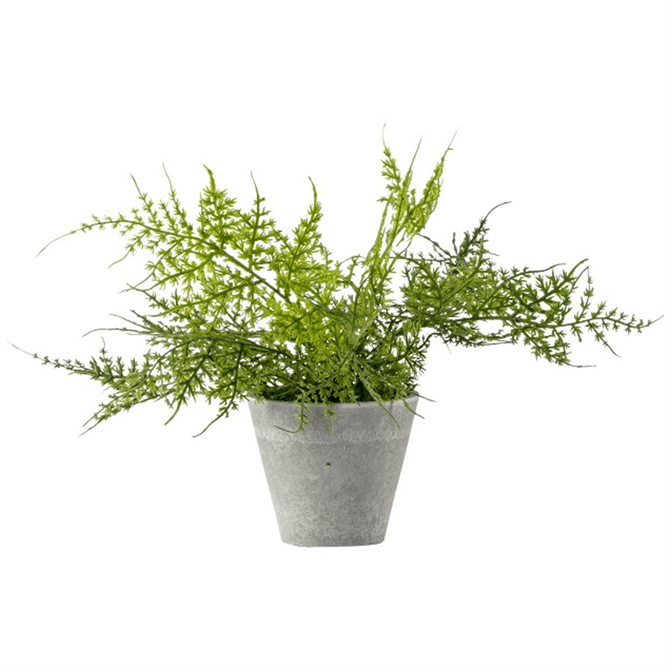 Gallery Direct Potted Fern Assorted