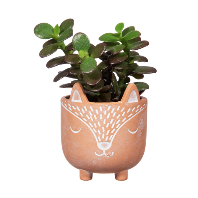 Sass & Belle Mini Woodland Fox Terracotta Planter