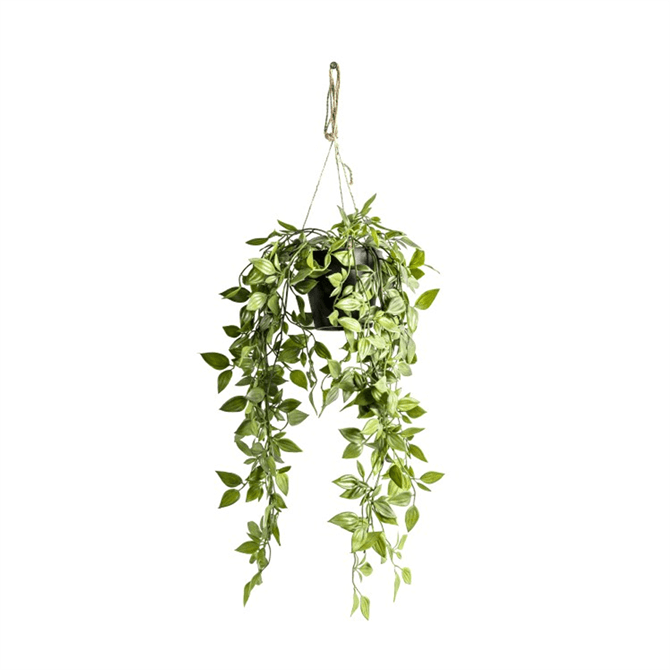 Gallery Direct Hanging Scindapsus Small