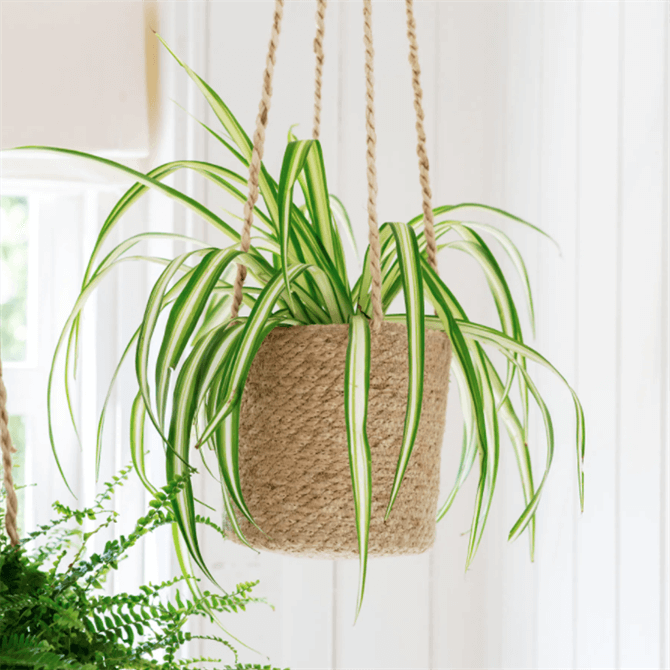 Garden Trading Woven Hanging Plant Pot