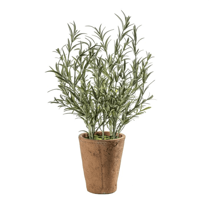 Gallery Direct Lavender Olive with Clay Pot