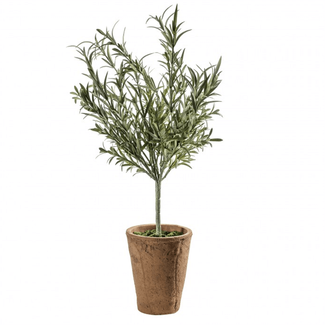 Gallery Direct Lavender Olive Tree with Clay Pot