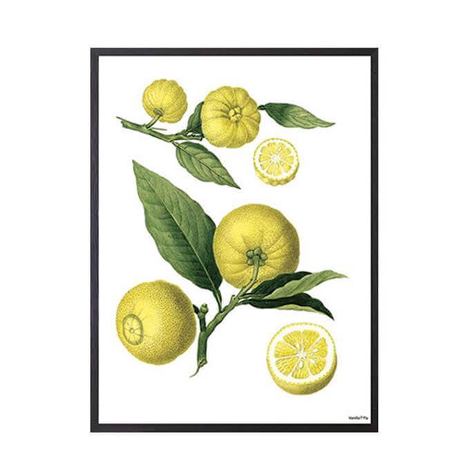 Vanilla Fly Poster Lemon 30x40 cm