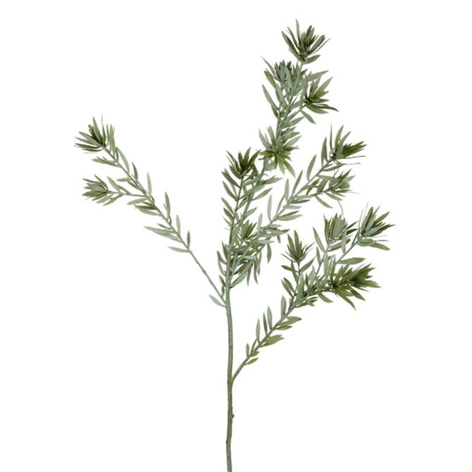 Parlane Leucadendron Stem Green