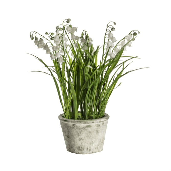 Gallery Direct Potted Lily of the Valley Small