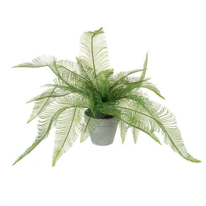 Parlane Feathered Potted Fern