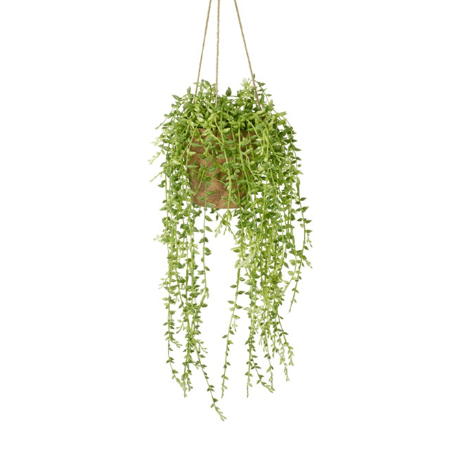 Gallery Direct Hanging Senecio with Earthenware Style Pot