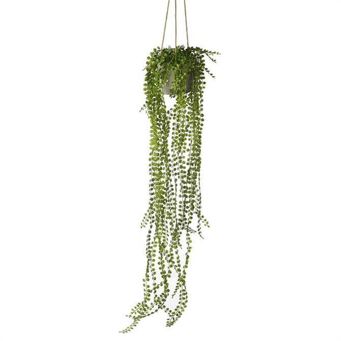Parlane Potted Hanging Pearl Spray