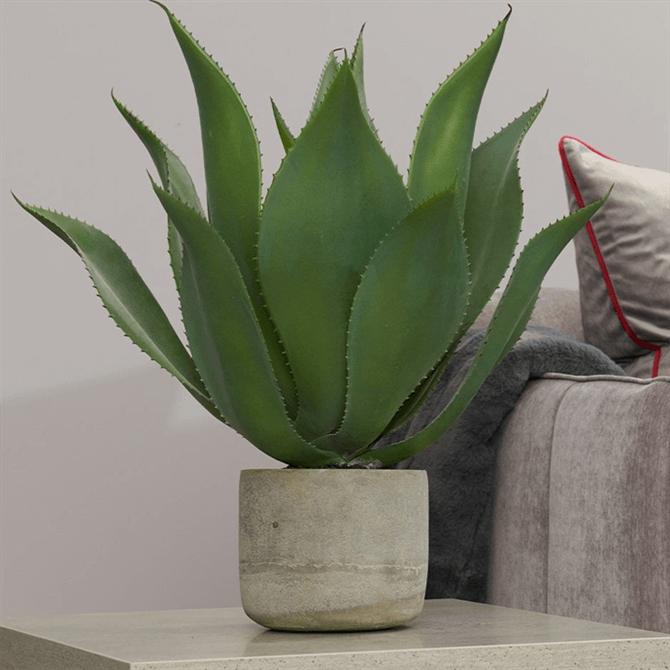 CH Aloe Vera Plant in Clay Pot