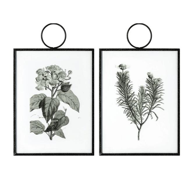 The Botanist Study  I Hanging Art Set of 2