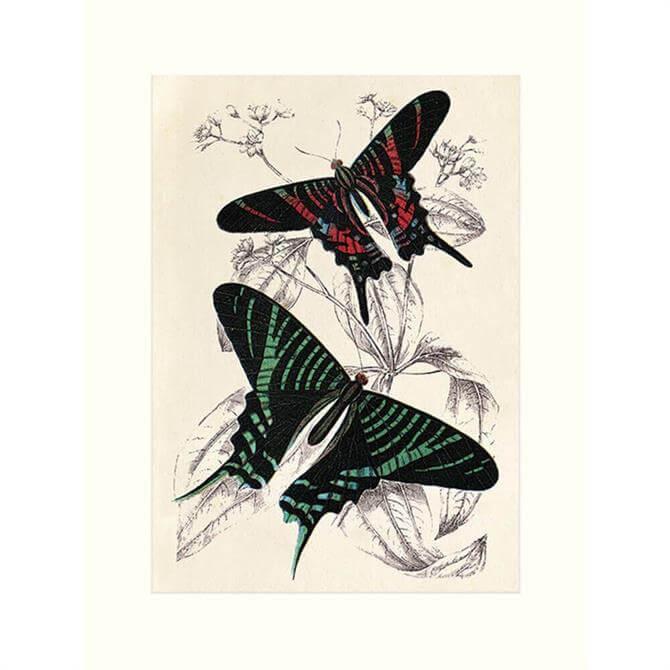 The Art Group Mounted Butterflies Print 30x40