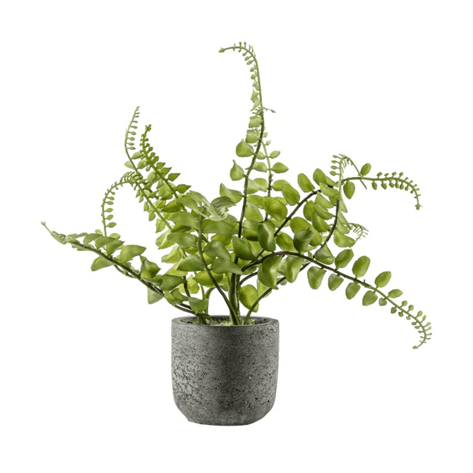 Gallery Direct Potted Royal Fern