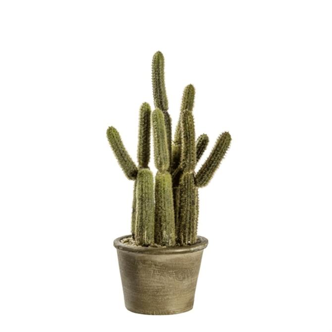 Gallery Direct Cactus Carnegiea Small