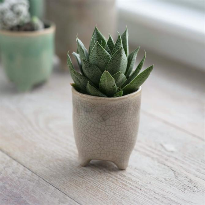 Garden Trading Stone Positano Ceramic Pot Small