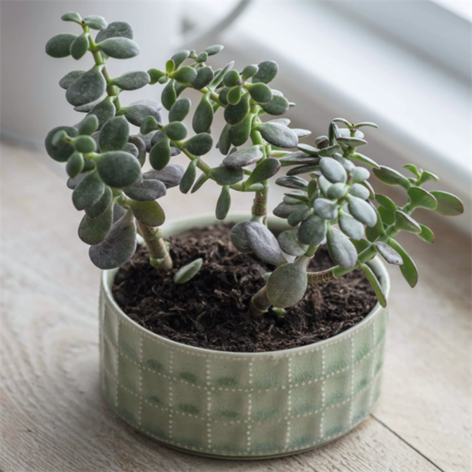 Garden Trading Ceramic Sorrento Bowl Green