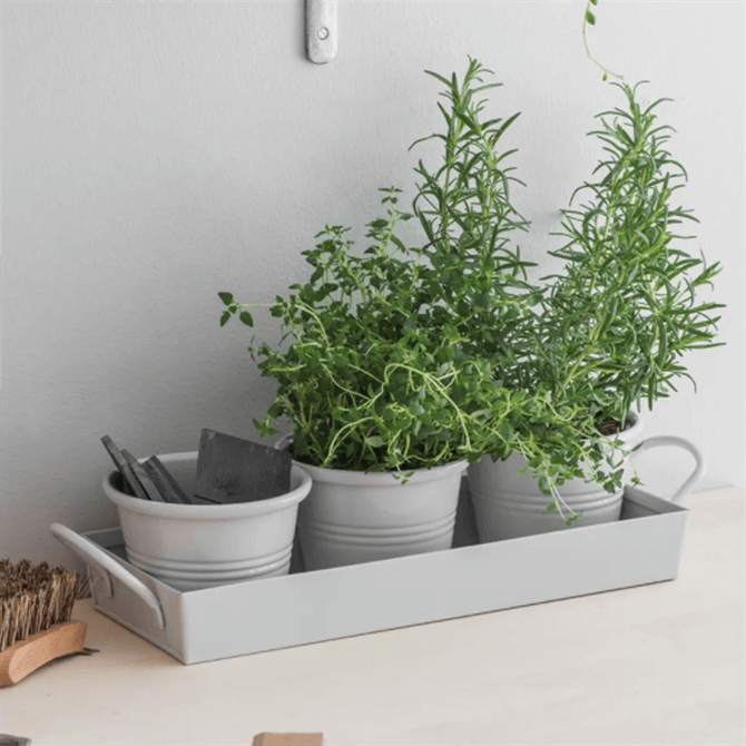 Garden Trading Set of 3 Pots on a Tray