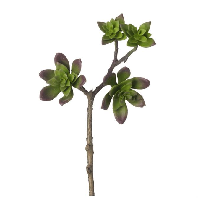 Parlane Echeveria Stem Green