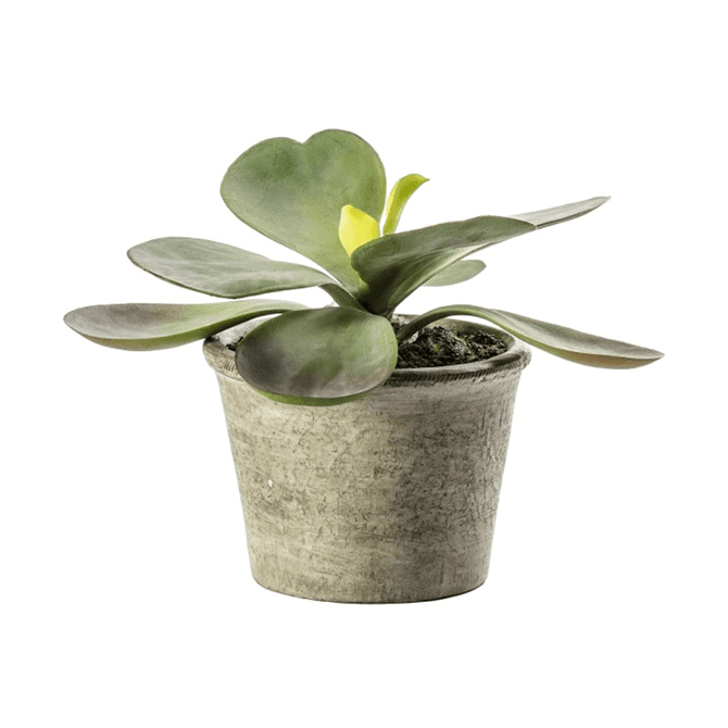 Gallery Direct Kalanchoe Pale Green