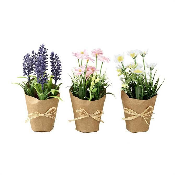 Pretty Flowers In Pots Mix