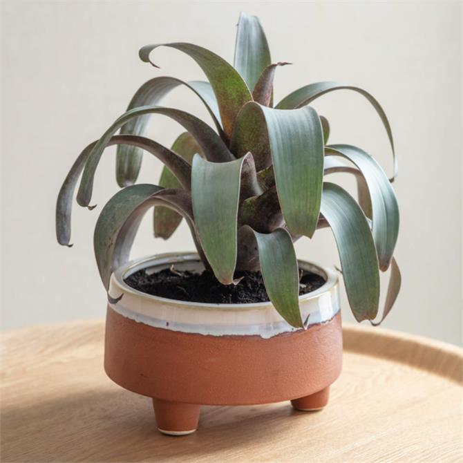 Garden Trading Halston Ceramic Bowl