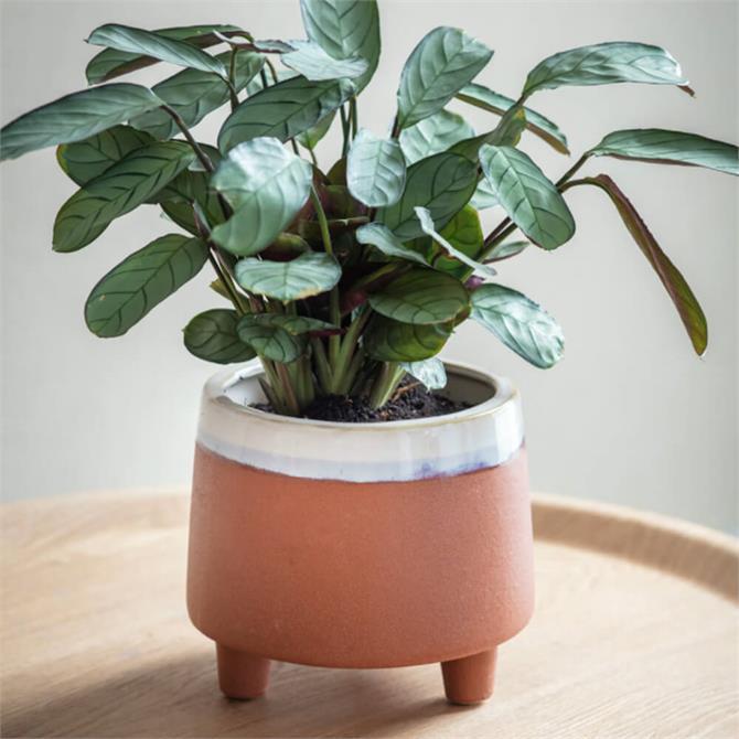 Garden Trading Halston Ceramic Pot Large