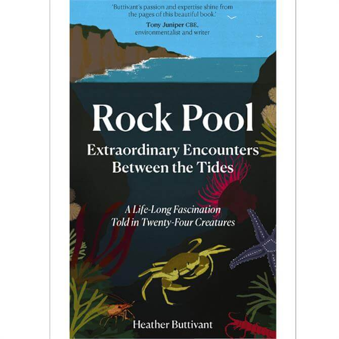Rock Pool: Extraordinary Encounters Between the Tides By Heather Buttivant (Hardback)