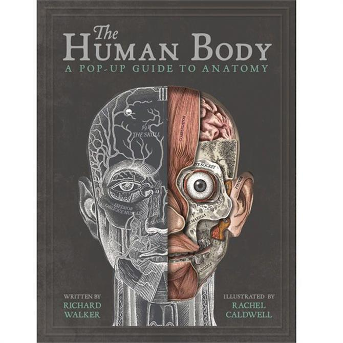 The Human Body: A Pop-Up Guide to Anatomy by Richard Walker (Hardback)