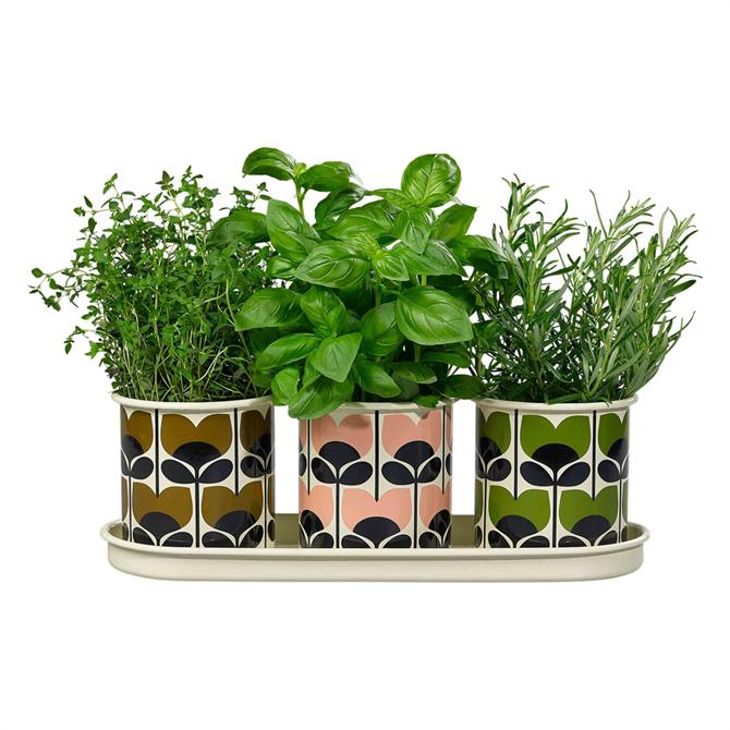 Orla Kiely 3 Herb Pots with Tray, Climbing Rose
