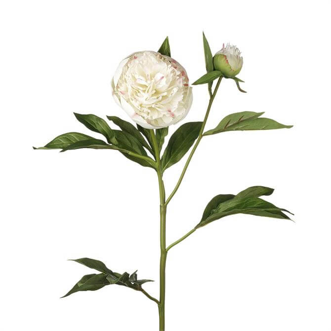 Parlane Peony Stem - White/Pink