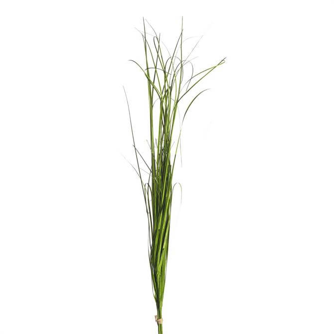 Parlane Onion Grass Bundle