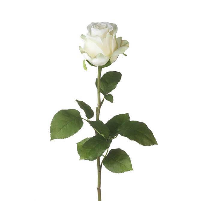 Parlane White Rose Equador Stem