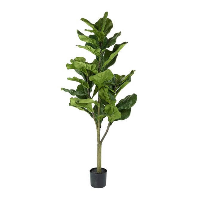 Parlane Fiddle Tree with Leaves