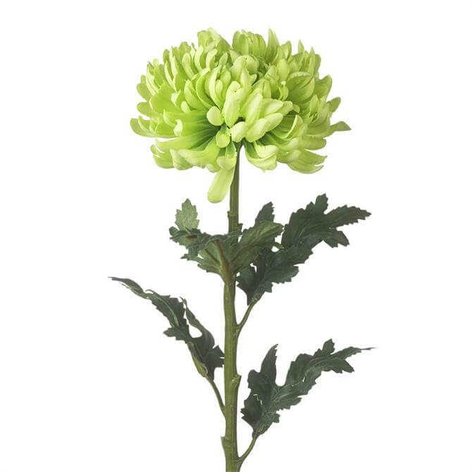 Parlane Green Chrysanthemum Stem