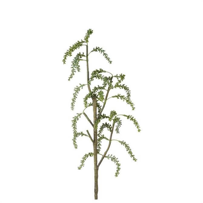 Parlane Weeping Seed Spray 57 cms
