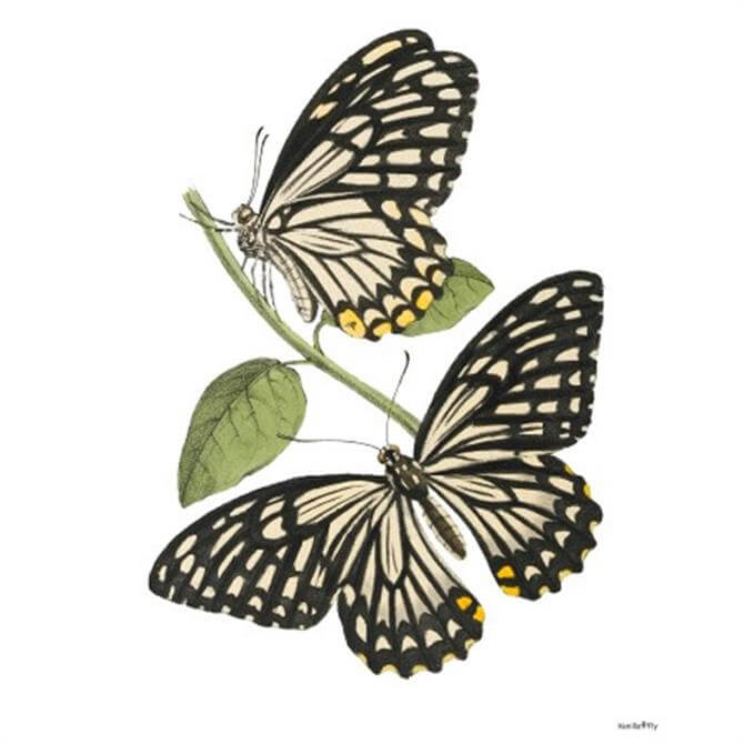 VanillaFly Black and White Moth Design Poster
