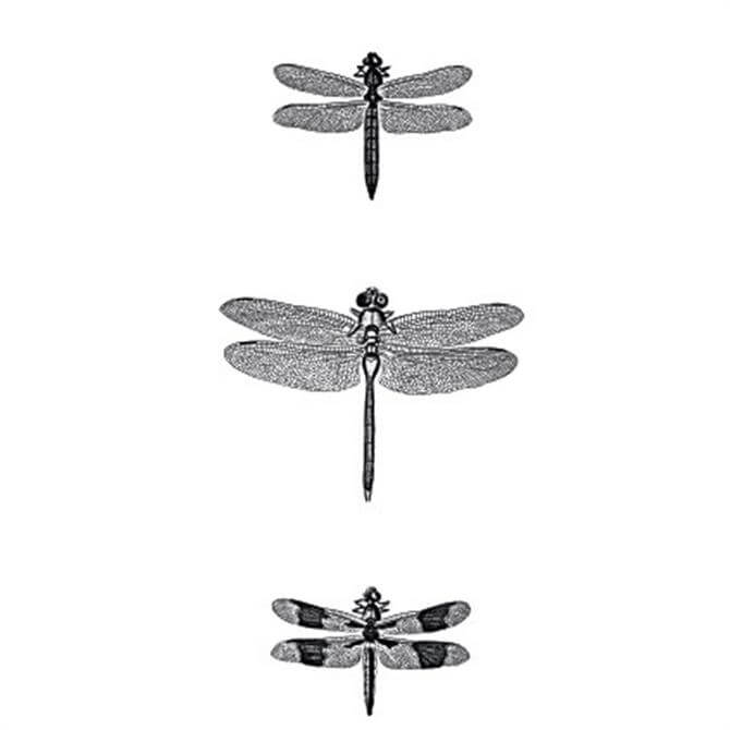 VanillaFly Three Dragonflies Design Poster