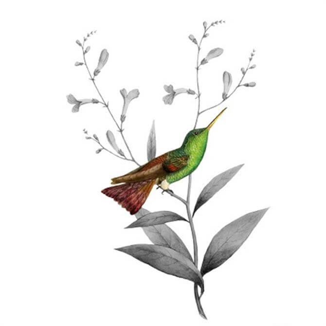 VanillaFly Funky Bird Design Poster