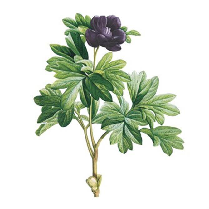VanillaFly Purple Flower Design Poster
