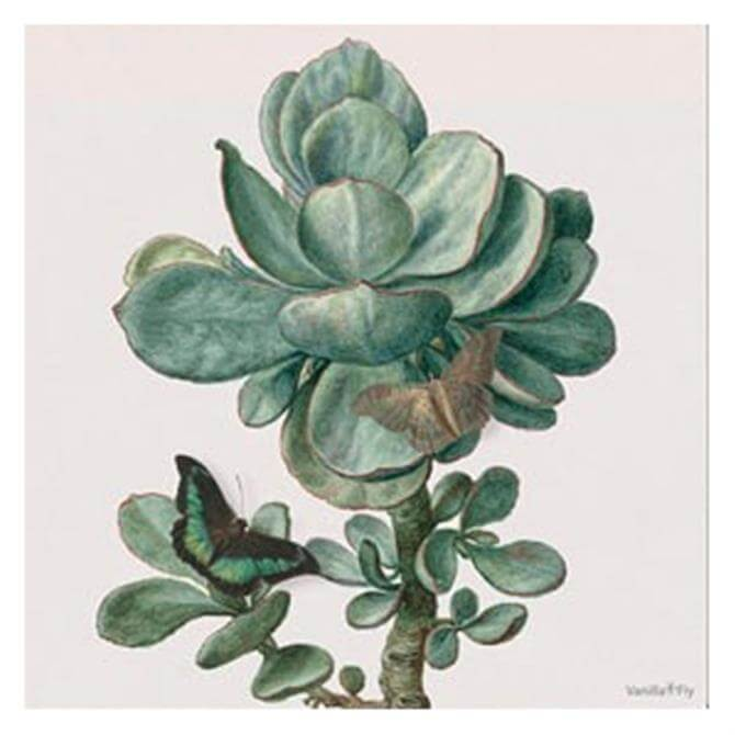 VanillaFly Succulent Design Poster