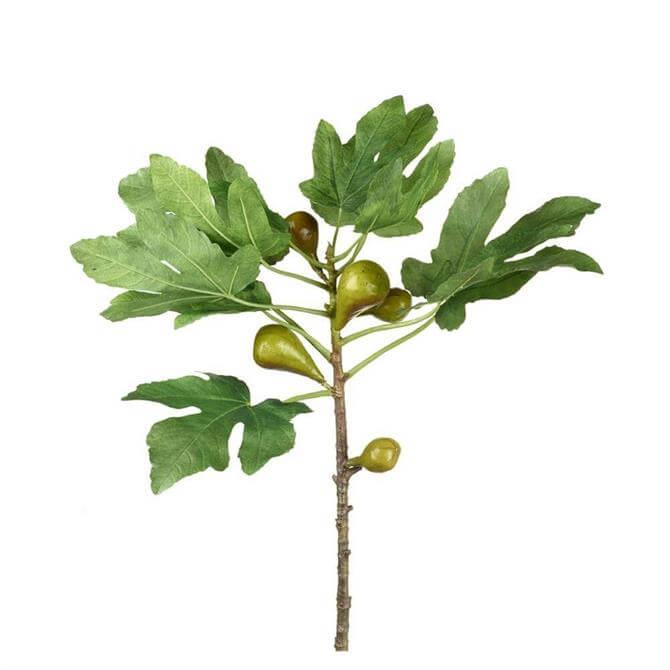 Parlane Fig Branch