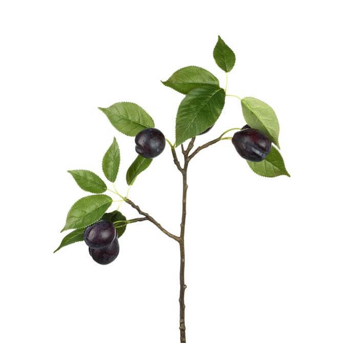 Parlane Plum Branch x 5
