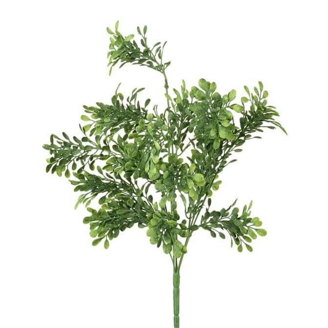 Parlane Buxus Bush
